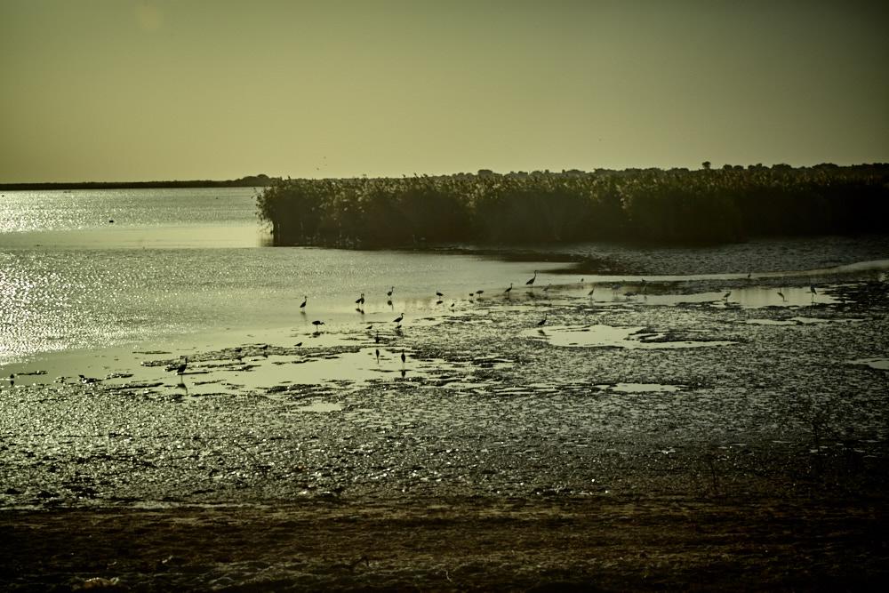 Flora und Fauna im Senegal-Fluss