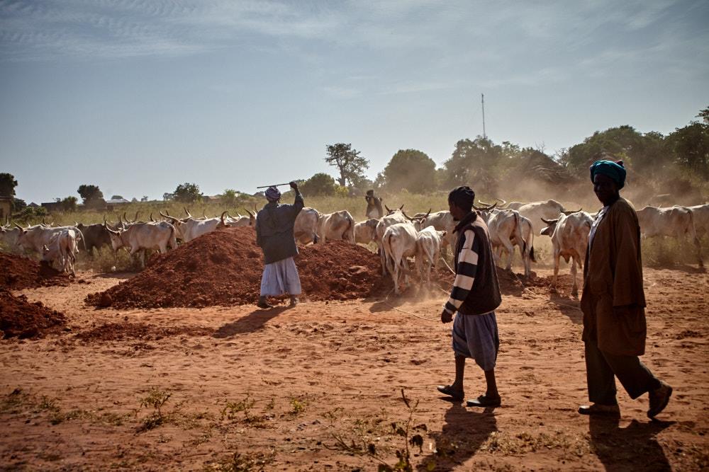 Alltag im Senegal